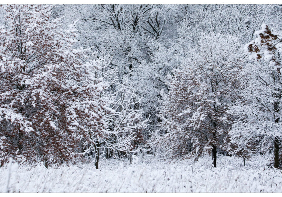Snow-covered trees at the Celery Bog Nature Area in West Lafayette, Indiana